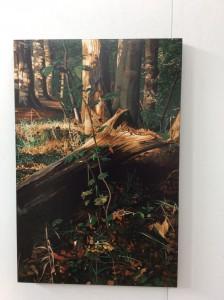 Eugen Kunkel; Die Bilder kosten zwischen 600 und 2.000 Euro.